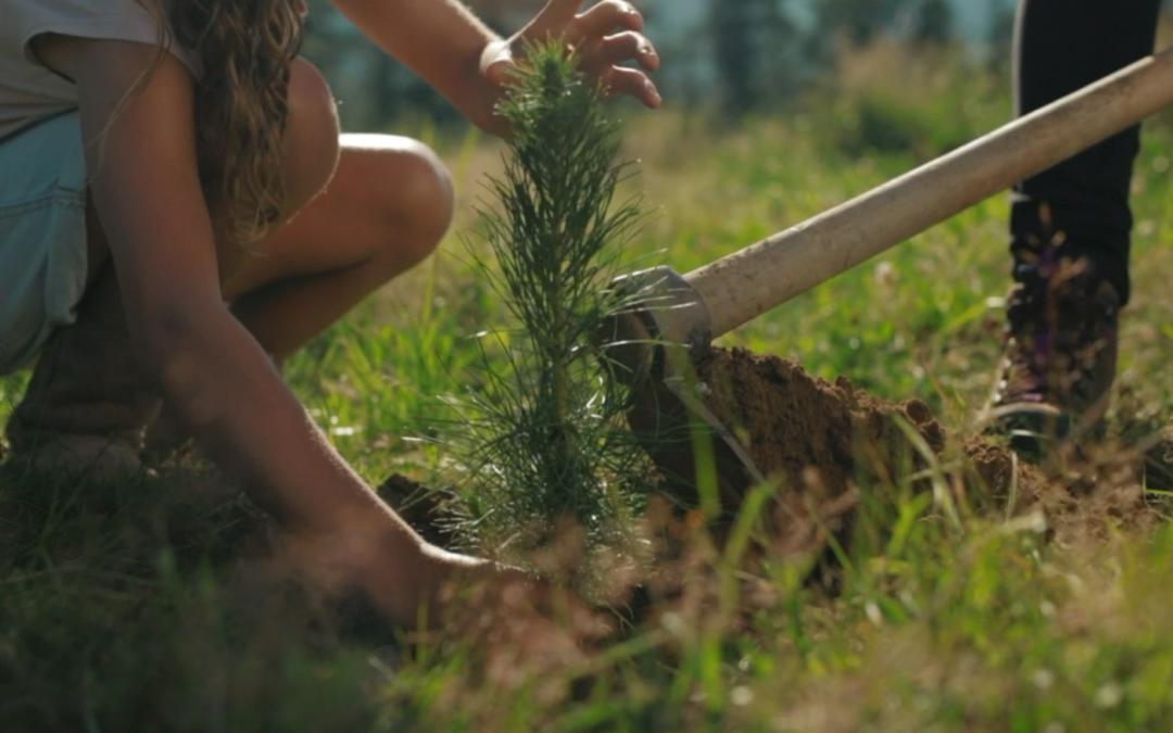 """Campaña """"GURE ZURA"""". La madera de Euskadi está en nuestra vida"""